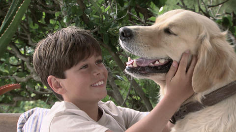 Boy and pet golden retriever Stock Video Footage