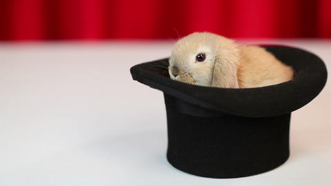 Rabbit in a hat Stock Video Footage