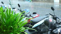 Tropical rain in Phuket Footage