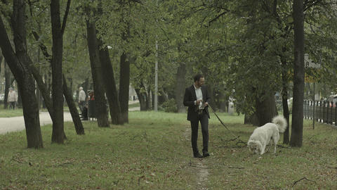 business man quietly walks with big white dog in the park Footage