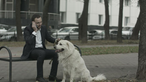 Business man talking by phone, big white dog siting near him Footage