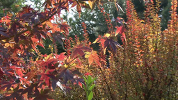 Bright Colors Of Autumn In The City Park Of Krasnodar, Russia stock footage