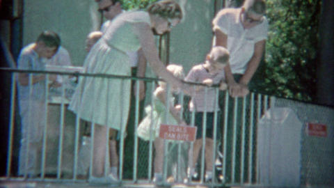 1963: 'Seals Can Bite' aquatic zoo as women feeds animals dead fish from above Live Action