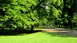 view of the sunny harmony park with path Footage