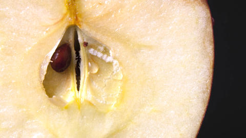 Ripe Apple Showing the Seed Footage