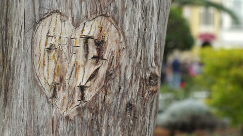Heart Carved in Tree Dolly Footage