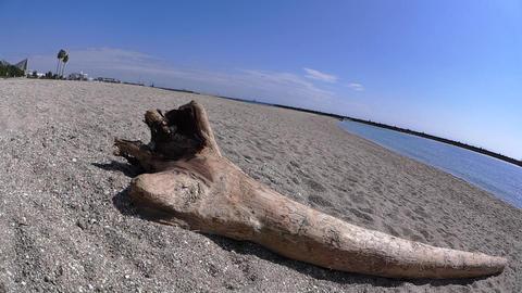 Driftwood on a White Sandy Beach ライブ動画