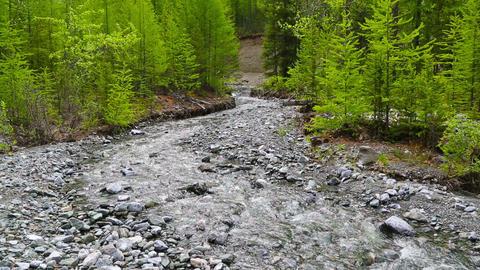 mountain river landscape, Altai, Russia Footage