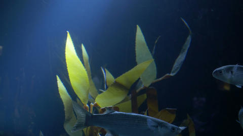 Fish and Light Rays in Sea Footage