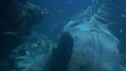 Ocean Creatures View Live Action