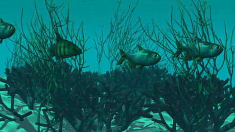 aquarium with fishes and plants Animation