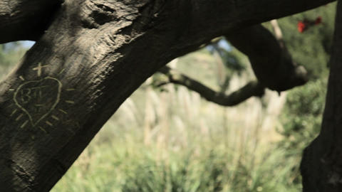 Young couple kissing by tree with names carved in it Stock Video Footage