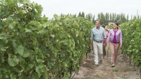 People walking through vineyard Stock Video Footage