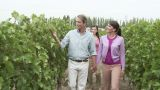 People walking through vineyard Footage