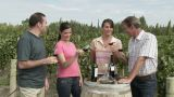 People wine tasting in a vineyard, raising glasses to the camera Footage