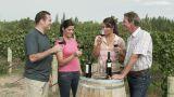 People wine tasting in a vineyard Footage