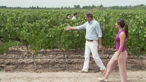 People walking through vineyard, looking at plants Stock Video Footage