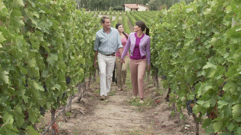 People walking through vineyard Stock Video Footage