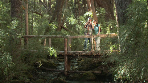 Couple taking photographs on bridge in forest Stock Video Footage