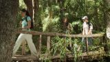 Hikers walking across bridge in forest Footage