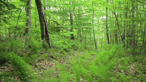 Female cyclists pushing bikes through forest Stock Video Footage