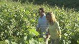 Couple walking through vineyard Footage