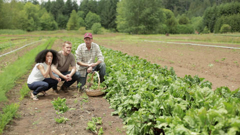 Three people in field of vegetable crops on farm Footage