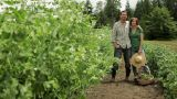 Mature couple standing in a field on farm Footage