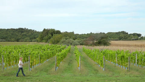 Woman walking through vineyard Stock Video Footage