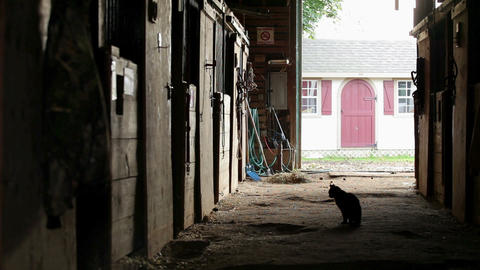 Cat walking in empty stable Stock Video Footage