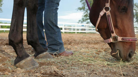 Horse grazing on hay in paddock Stock Video Footage