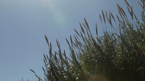 Coastal grass, Marbella, Spain Stock Video Footage