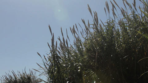 Coastal grass, Marbella, Spain Stock Video Footage