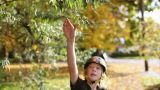 Boy skateboarding and pulling leaf from tree Footage