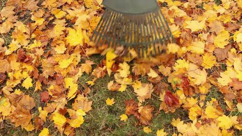 Person raking leaves Stock Video Footage