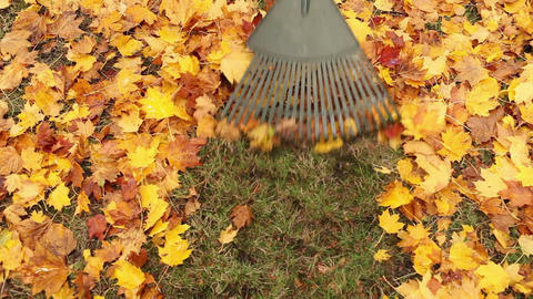 Person raking leaves Stock Video Footage