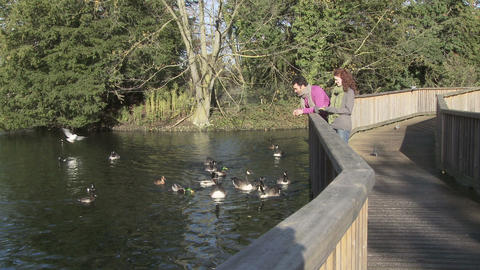 Couple feeding ducks in the park Stock Video Footage