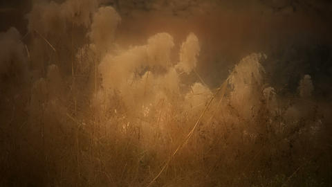 river reeds in wind,shaking wilderness,Hazy style Stock Video Footage