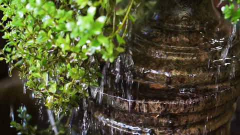 Water Drops Cascade From Green Leaves stock footage