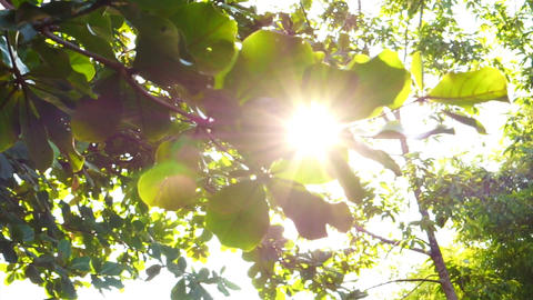 Sun shine through tree leaves slide shot Footage