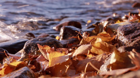 Water splashing on shore with dried autumn leaves Footage