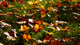 Leaves in the grass, autumnal landscape Footage