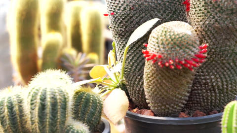The Garden of Cactus & Succulent plant Footage