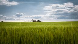 Idyllic Wheat Field Panorama Footage