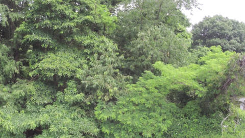 Aerial view of trees in forest Footage