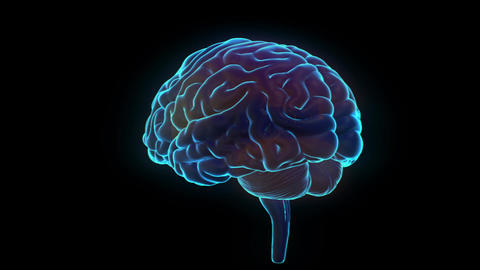 Science fiction medical design element rotating human brain highlight parts Animation