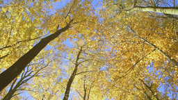 Golden Sunny Autumn In Park stock footage