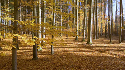 Autumn Landscape With Falling Leaves stock footage