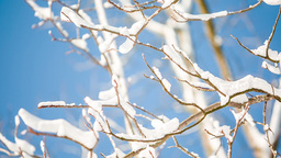 Snow On Branches In Winter One stock footage