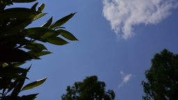View from the ground up to the blue sky on a sunny day with plants and trees Footage